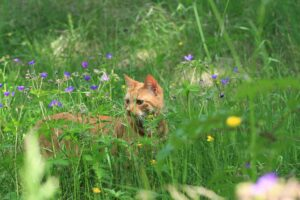 ginger cat in garden
