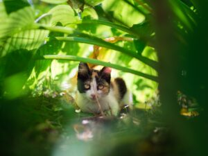 young cat amonst plants