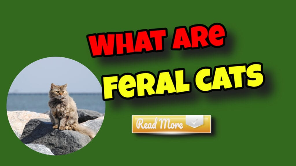 what are feral cats read more